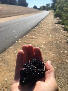 Eating blackberries on one of my stops