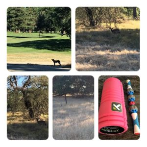 Nature at its best, including one coyote, many deer, and my foam roller for after the run